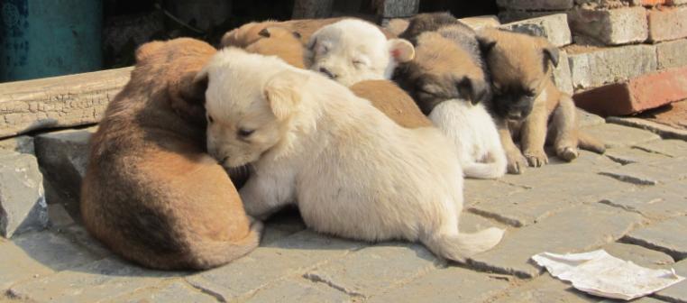 好多的刚出生的小狗狗,可爱哇