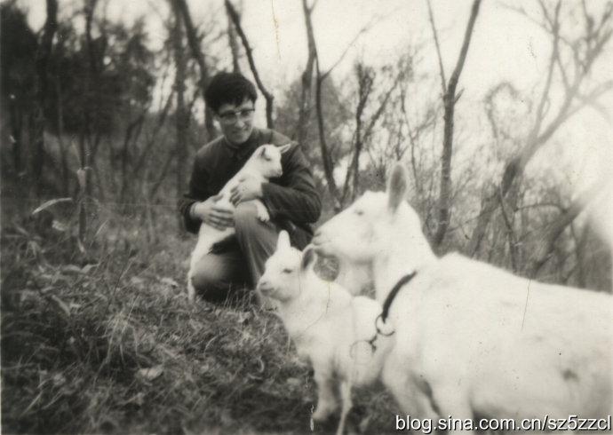 农村杀猪杀马杀牛